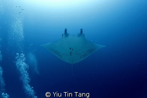 germam channel, manta across my head!